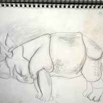 10 Rhino drawing from museum of surgeons